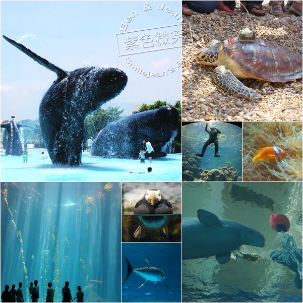 ▋屏東旅遊▋國立海洋生物博物館~巧遇海龜放生