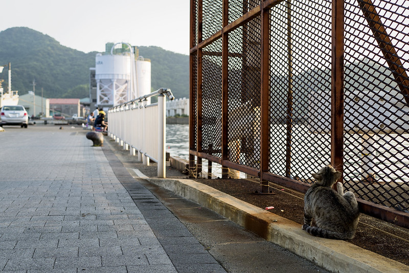 Cat Memories 2014/07/02