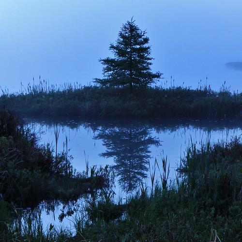 new blue summer reflection tree june fog pine cat sunrise cherry reflecting spring pond wildlife nh hampshire hike shore hour northern bog tails refuge pondicherry 2014