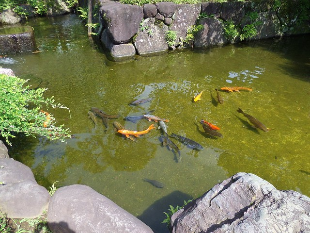 Fish at Nishiarai Daishi temple