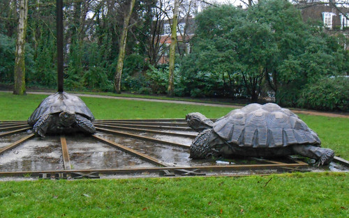 Holland Park Tortoises.
