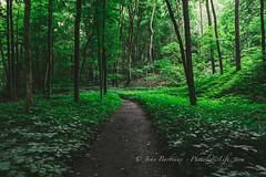 Hells Hollow Trail