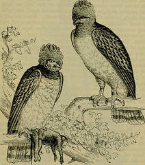 """Image from page 592 of """"Reptiles and birds : a popular account of their various orders, with a description of the habits and economy of the most interesting"""" (1883)"""