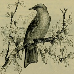 """Image from page 542 of """"Reptiles and birds : a popular account of their various orders, with a description of the habits and economy of the most interesting"""" (1883)"""