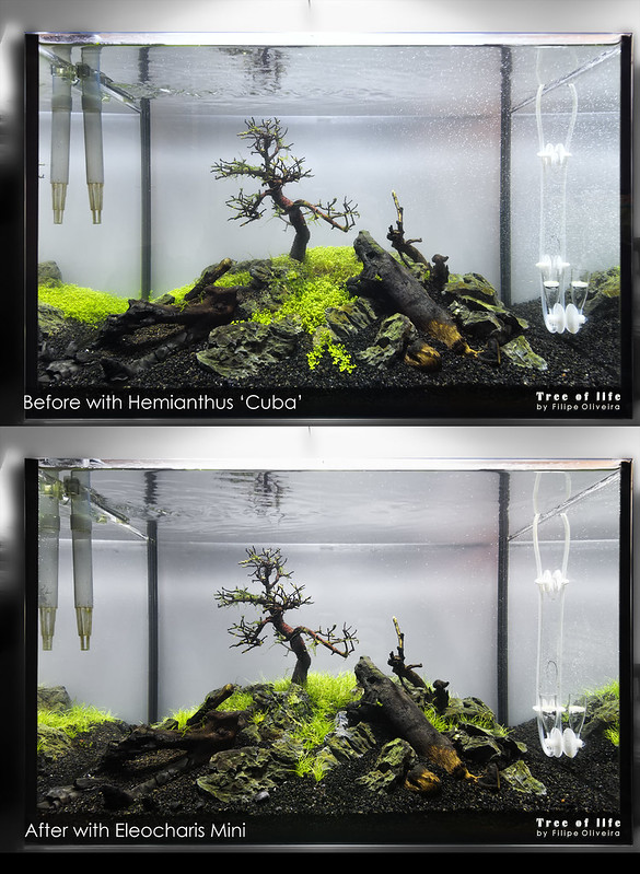 Tree of Life - Before and After