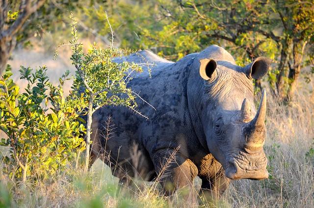 Tintswalo Safari Lodge review