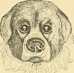 """Image from page 463 of """"Diseases of the dog and their treatment"""" (1911)"""