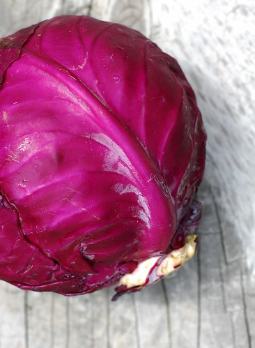 A head of red cabbage from Hearty Roots Community Farm by Eve Fox, The Garden of Eating, copyright 2014
