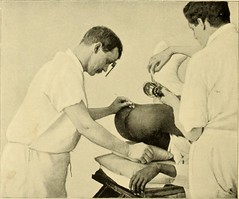 "Image from page 895 of ""Clinical gyncology, medical and surgical"" (1895)"