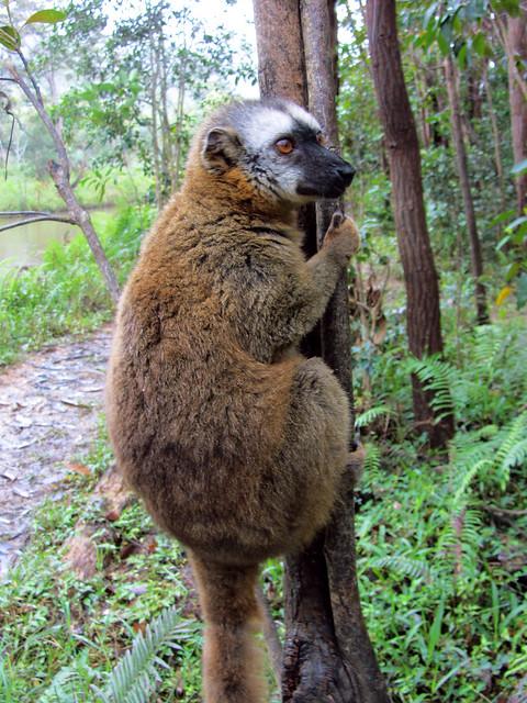 Madagascar3 - 094