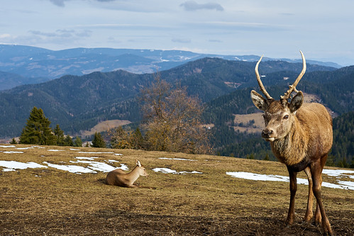DSC05386 Oh Deer