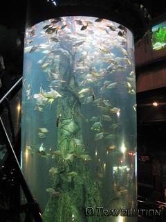 Εικόνα από Aquarium. malaysia kuala lumpur aquaria klcc petronas towers fish aquarium