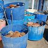 #Pembrokeshire crabs