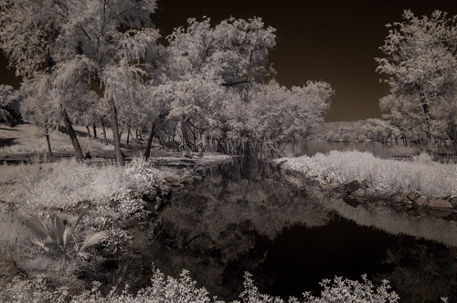 infrared infraredphotography ir trees vegetation convertedinfraredcamera highcontrast water sky nature lindolake lakeside infrarouge