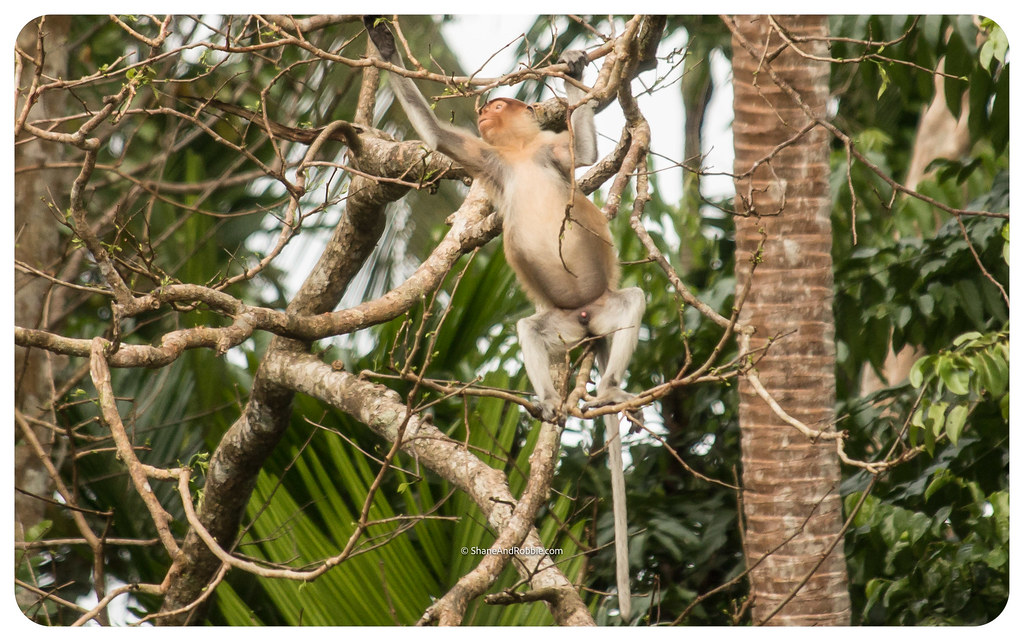 Borneo-20170407-IMG_6973