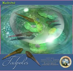 DDDF MUDRANA  Tadpoles