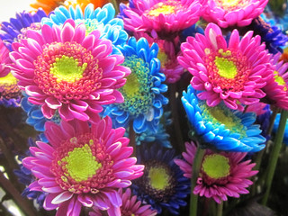 Pink and Blue Daisies
