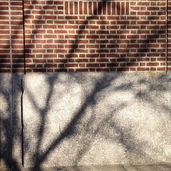 Just another branch in the #wall #tree #shadow
