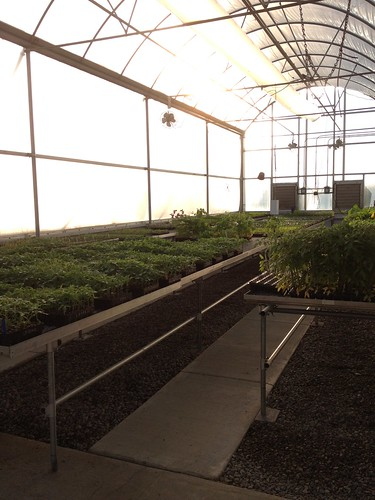 Early Morning at the Greenhouse