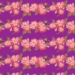 Dzikie róże, fioletowe tło