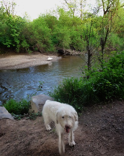 Molly at the River