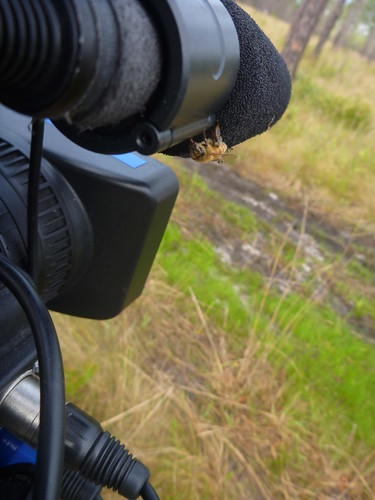 A bee on our camera