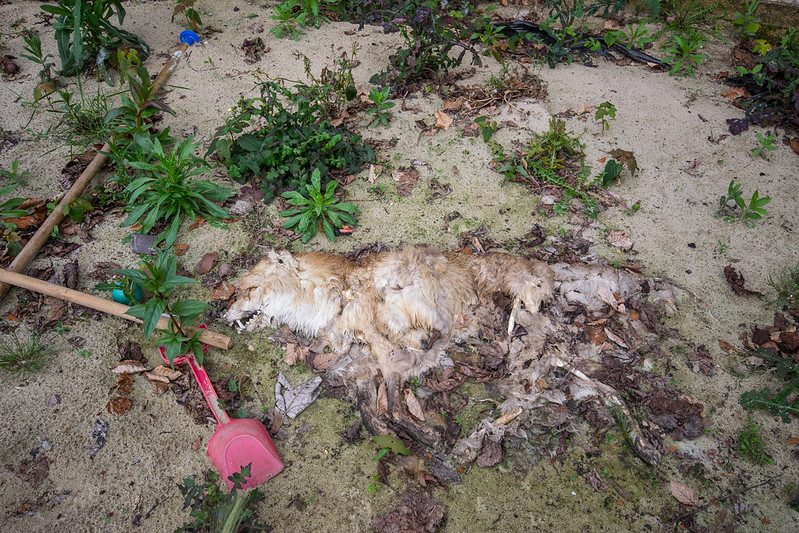 Decomposing Fox