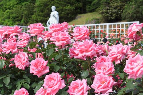 Season of roses / バラの季節