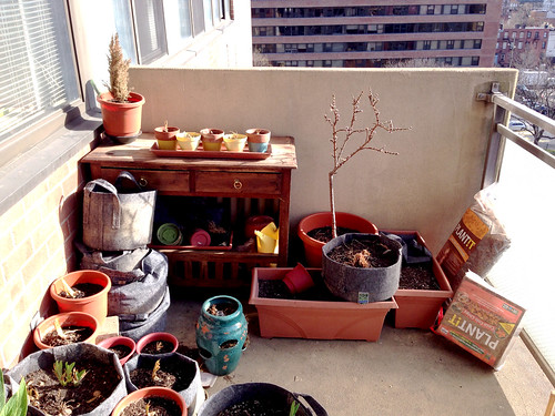 Modest balcony garden