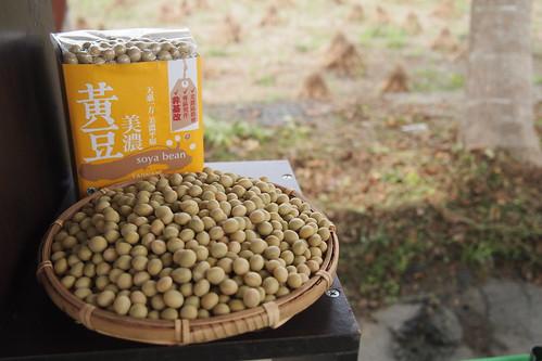 美濃農會今年初與農民契作試種台灣本土非基改大豆,近日即將收成上市。攝影:李育琴。