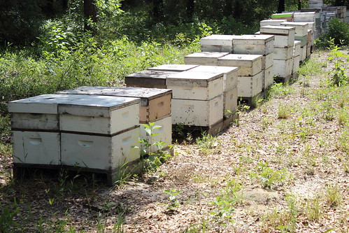 Bee hives in Wewahitchka