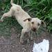 Cachorrito abandonado en la carretera - Puppy abandoned on the highway; entre Tehuantepec y Matatlán, Oaxaca, Mexico por Lon&Queta