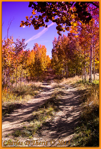 1160 110 35mm 35350mm 5d 5dclassic 5dmarki aspencolor aspentrees autumn canon classic colorado coloradosprings cripplecreek dirtroad dirttrail ef353503556lusm eos eos5d explore fall landscape magentafilter mark1 orange superzoom tellercounty trees unitedstates usa woods yellow tree treescape teller county co united states north america season color best wonderful perfect fabulous great photo pic picture image photograph