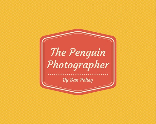 The Penguin Photographer