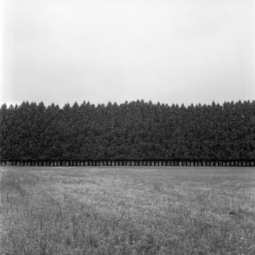 PFV_Trees1