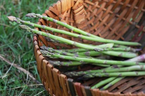 Asparagus Harvest Spring 2014
