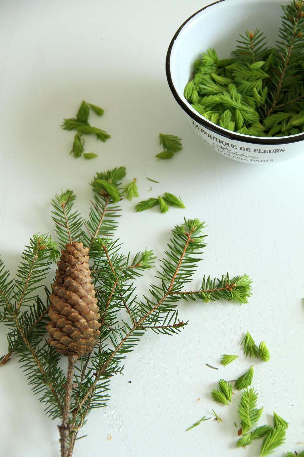 conifers11