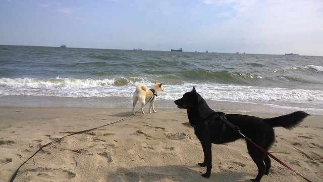 Yucca and Kira watching waves