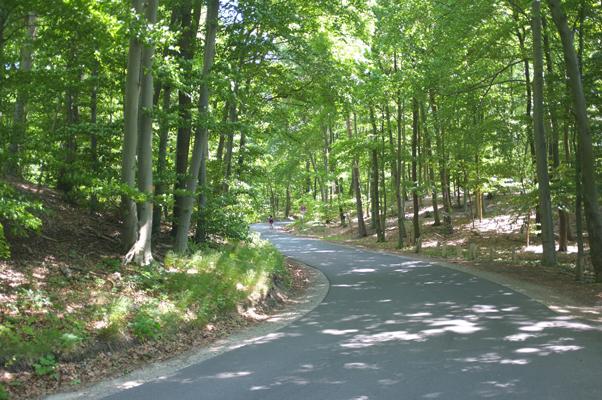 Straße nach Sacrow