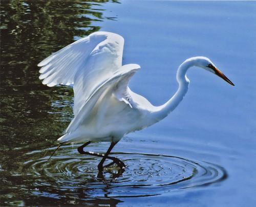 Egret ohio