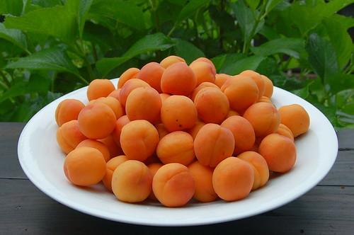 ★杏ジャムと庭の花たち★藤野から・・・