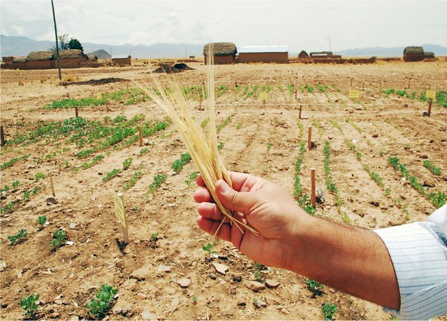 1_seguridad alimentaria diarioecologia.jpg