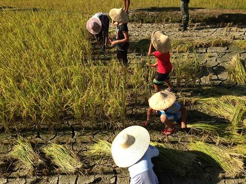 pagalongay必須學習傳統農耕知識。