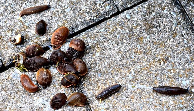 Slug group photo