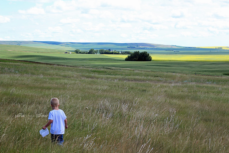 Saskatoon Berries 2014