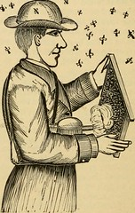 """Image from page 199 of """"Gleanings in bee culture"""" (1874)"""