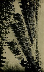 """Image from page 282 of """"The strangling of Persia; a story of the European diplomacy and oriental intrigue that resulted in the denationalization of twelve million Mohammedans, a personal narrative"""" (1912)"""