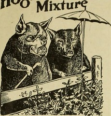 "Image from page 630 of ""The Utah Farmer : Devoted to Agriculture in the Rocky Mountain Region"" (1913)"