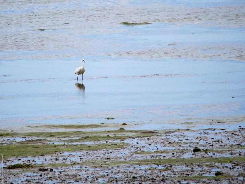 Dans le Golf du Morbihan 14785617932_d8518117d0_c