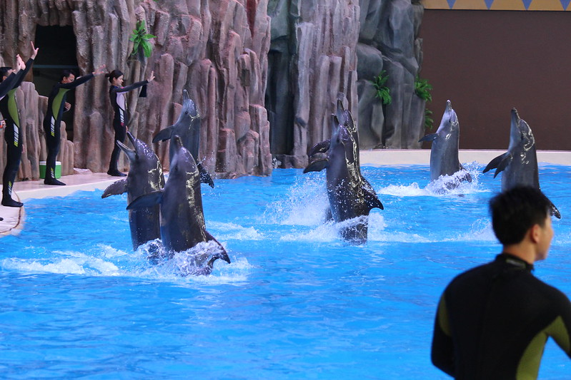 Dolphin performance at Chimelong Ocean Kingdom, China April 2014